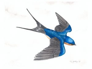 detailed watercolor bird painting of a barn swallow flying against a white and gray cloudy sky