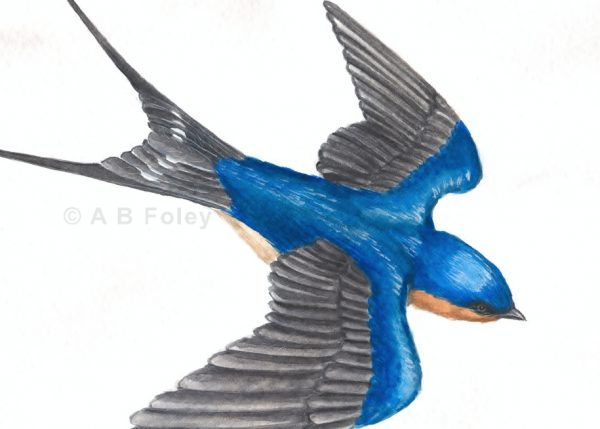 detailed watercolor bird painting of a barn swallow flying against a white and gray cloudy sky, detail