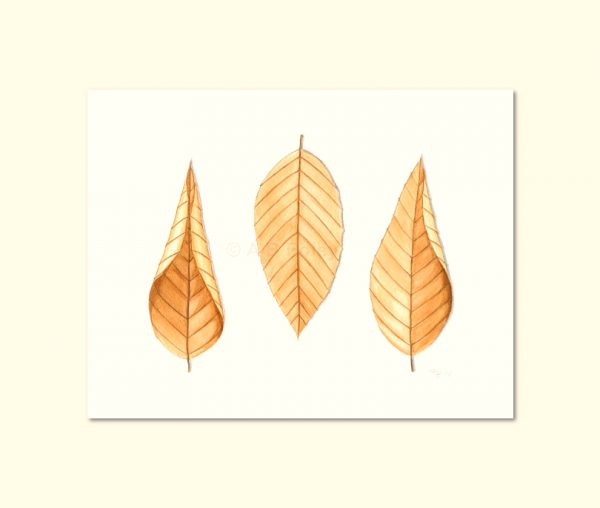 print from a minimalist watercolor illustration of three tan colored beech leaves on a white background, viewed from a distance