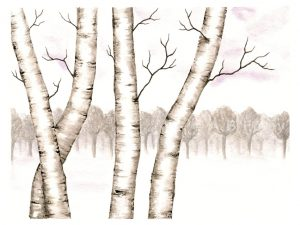 """Birches in the Snow"""