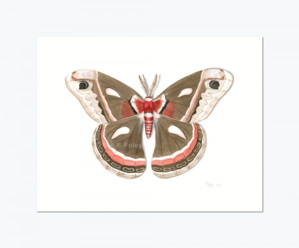 print from a detailed watercolor illustration of a brown and red cecropia moth on a white background, viewed from a distance