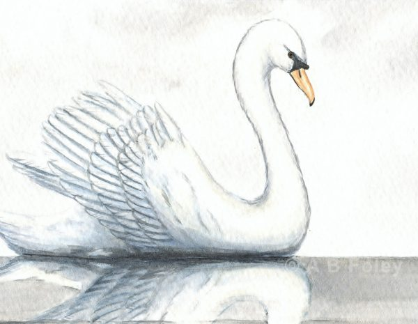 watercolor bird painting of a white swan swimming in calm gray water with its reflection under a cloudy sky, close up of detail