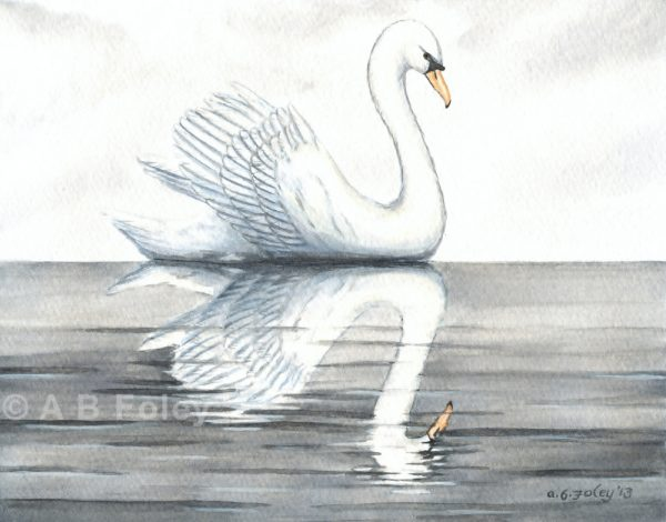 watercolor bird painting of a white swan swimming in calm gray water with its reflection under a cloudy sky