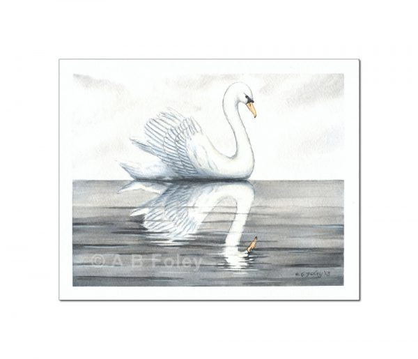 watercolor bird painting of a white swan swimming in calm grey water with its reflection under a cloudy sky, viewed from a distance on a white background