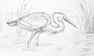 pencil sketch of a great blue heron standing in a water with its head lowered to hunt