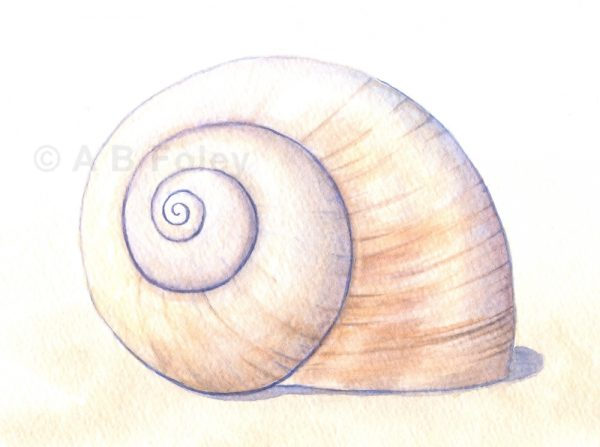 watercolor illustration of a beige moon snail shell on a pale sandy background, close up of detail