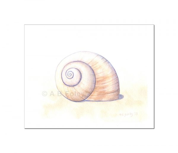 watercolor illustration of a beige moon snail shell on a pale sandy background, viewed from a distance