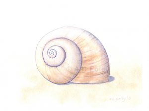 watercolor illustration of a beige moon snail shell on a pale sandy background