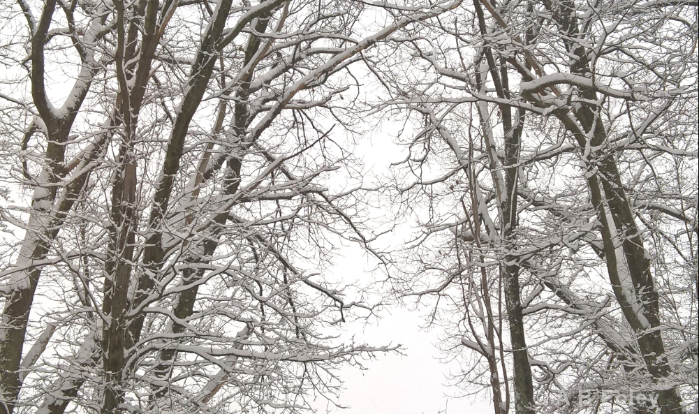 tree branches covered with snow against a white cloudy sky