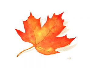 print from a watercolor painting of a red, orange and yellow maple leaf on a white background