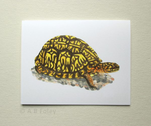 watercolor wildlife art note card with Eastern Box Turtle, Terrapene carolina carolina, pictured on a white backgorund