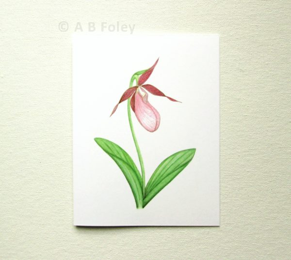 watercolor art botanical note card of pink lady's slipper orchid, photographed on a white background