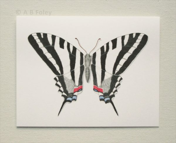 watercolor butterfly art note card of zebra swallowtail butterfly