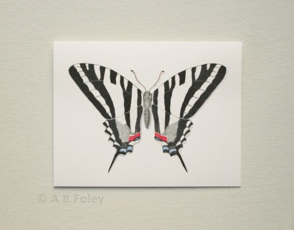 watercolor butterfly art note card of zebra swallowtail butterfly viewed on a light gray background
