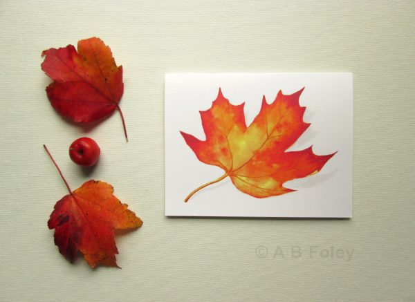 watercolor note card with red and yellow fall maple leaf, on a white background with two natural autumn leaves and a small crabapple