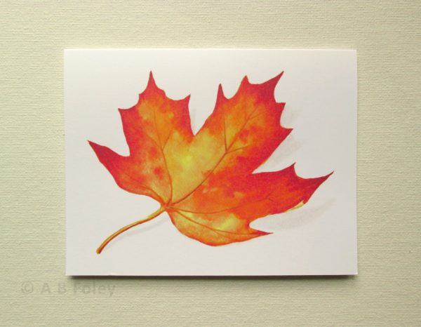 watercolor note card with red and yellow fall maple leaf, on a white background