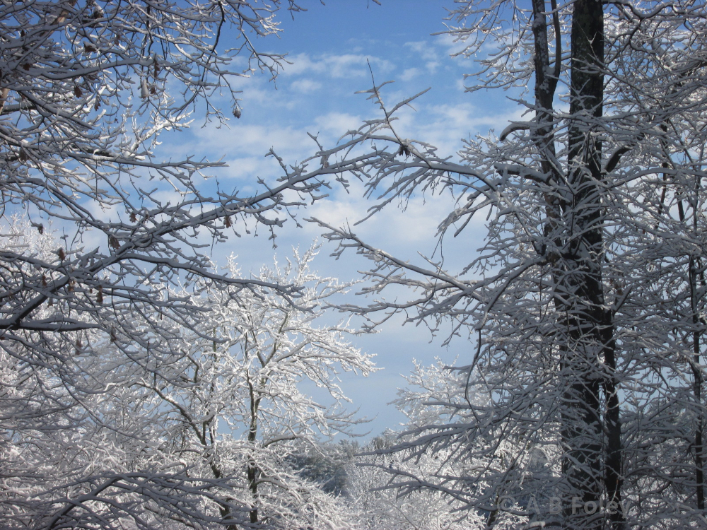 photo of snow covered tree branches with blue sky and clouds in the background