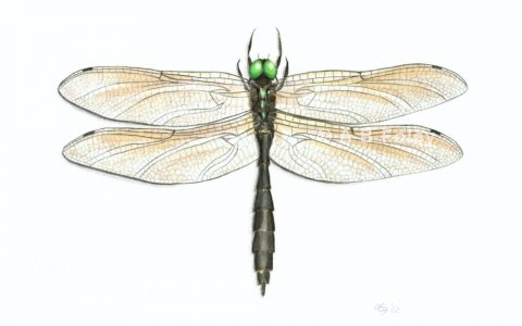 detailed watercolor illustration of a black dragonfly with green eyes
