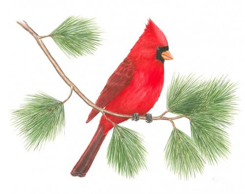 Cardinal with Pine Tassels