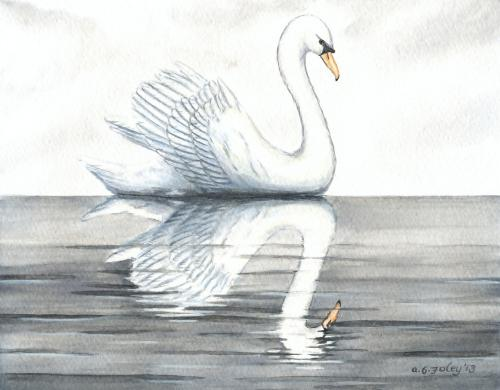 Swan and its Reflection in Calm Water